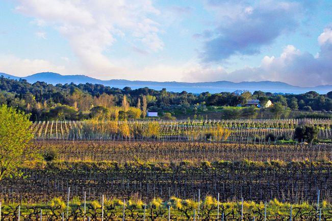 Wine growing estate, Var