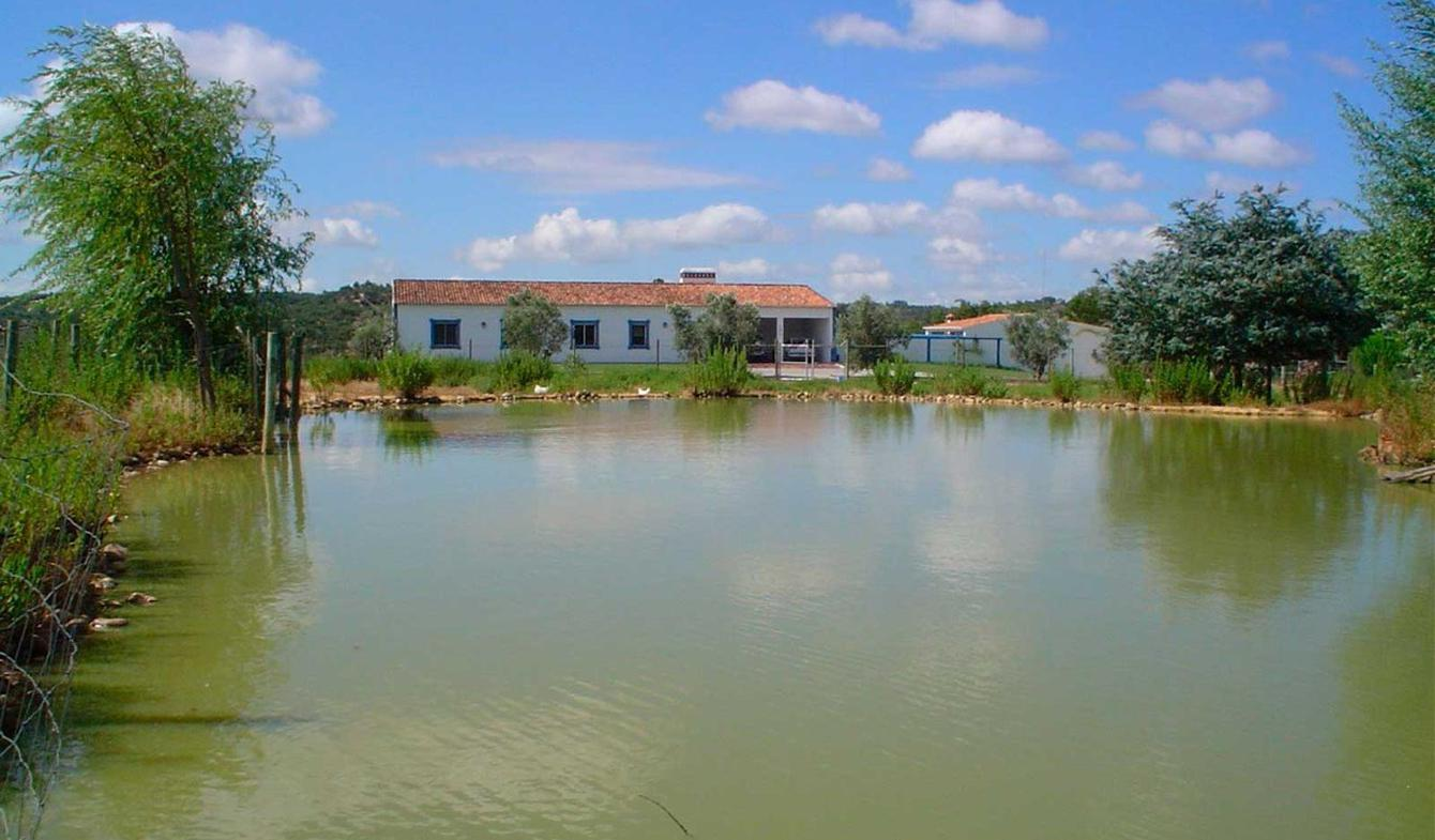 Propriété avec piscine District de Santarém