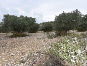 terrain à Pélissanne (13)