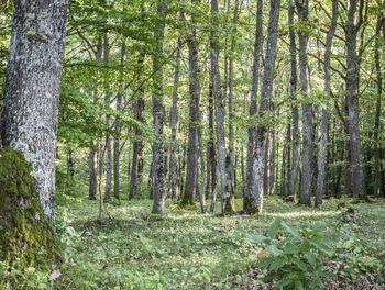 terrain à Moret-sur-Loing (77)