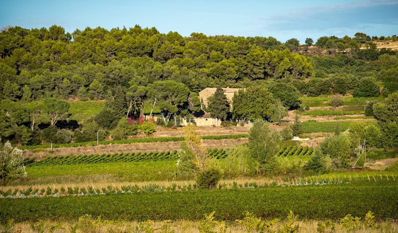 Vignoble Avignon