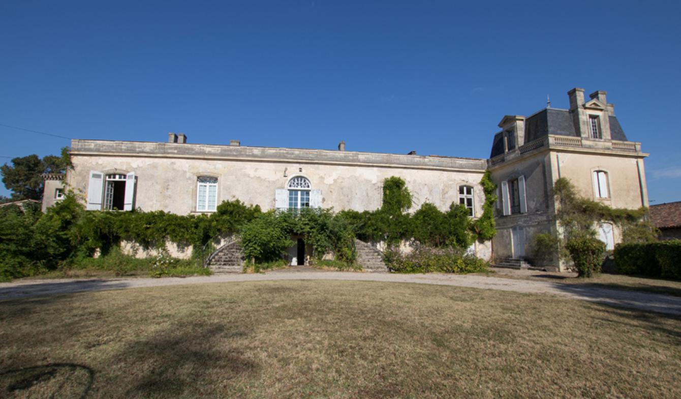 Vineyard Bordeaux