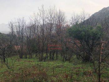 terrain à batir à Muro (2B)