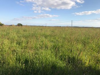 terrain à Pontonx-sur-l'Adour (40)