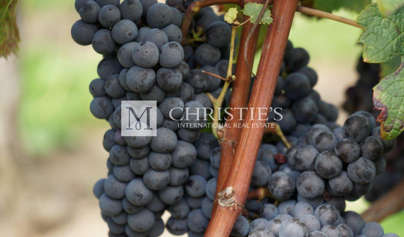 Propriété viticole Saint-André-de-Cubzac