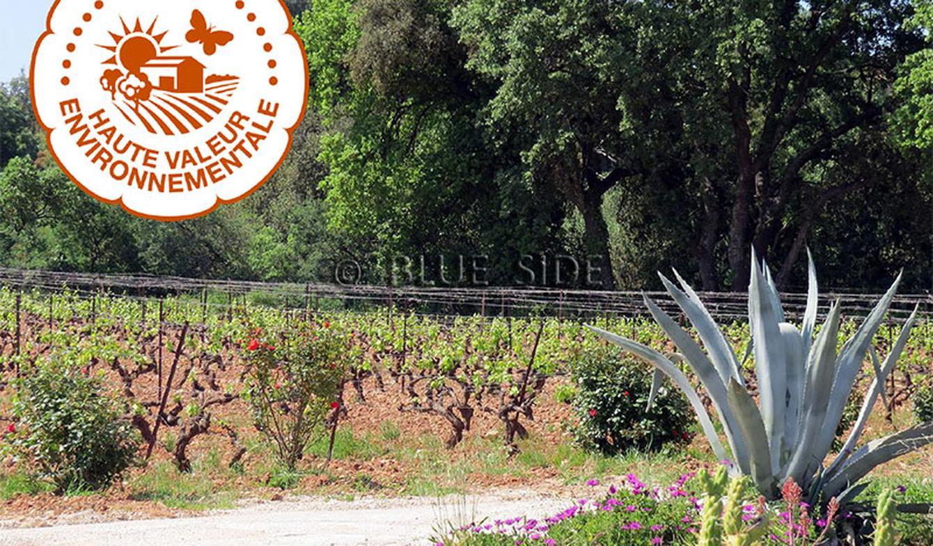 Propriété viticole Hyeres