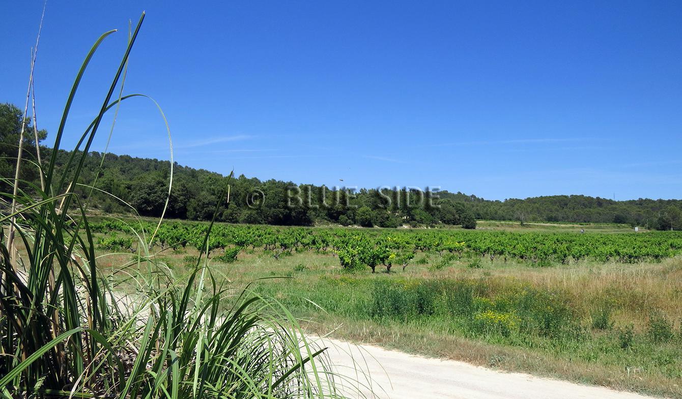 Propriété viticole avec piscine et dépendances Lorgues
