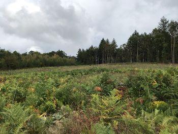 terrain à Marcillac-la-Croisille (19)