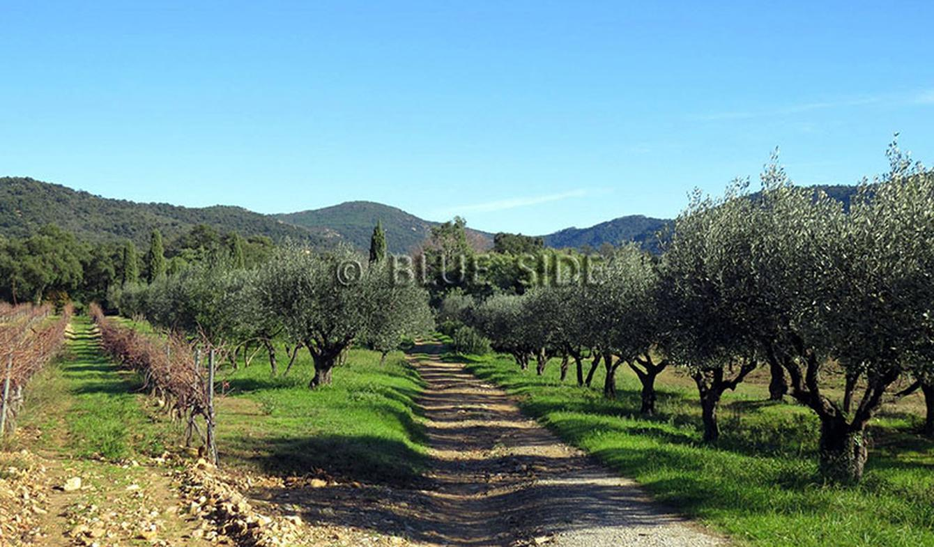 Vineyard with pool and outbuildings Var