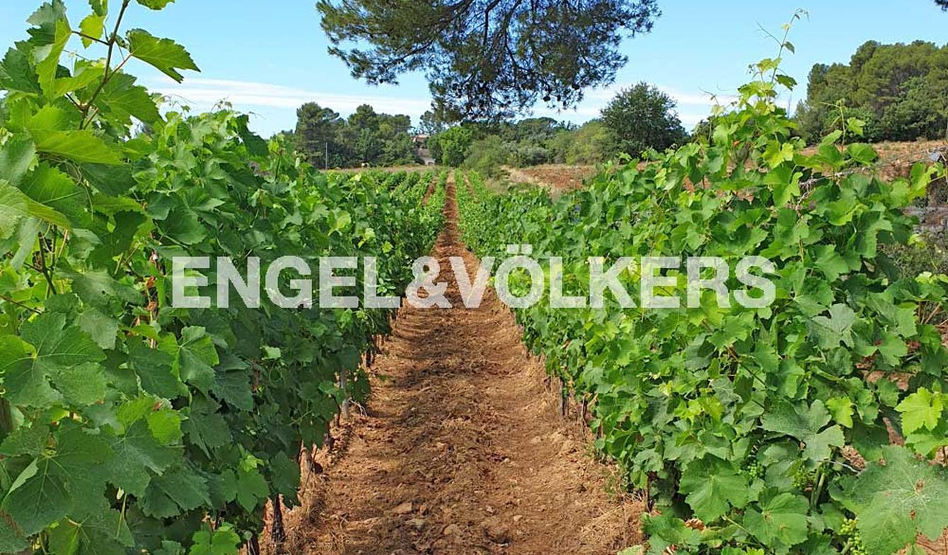 Propriété viticole Nimes