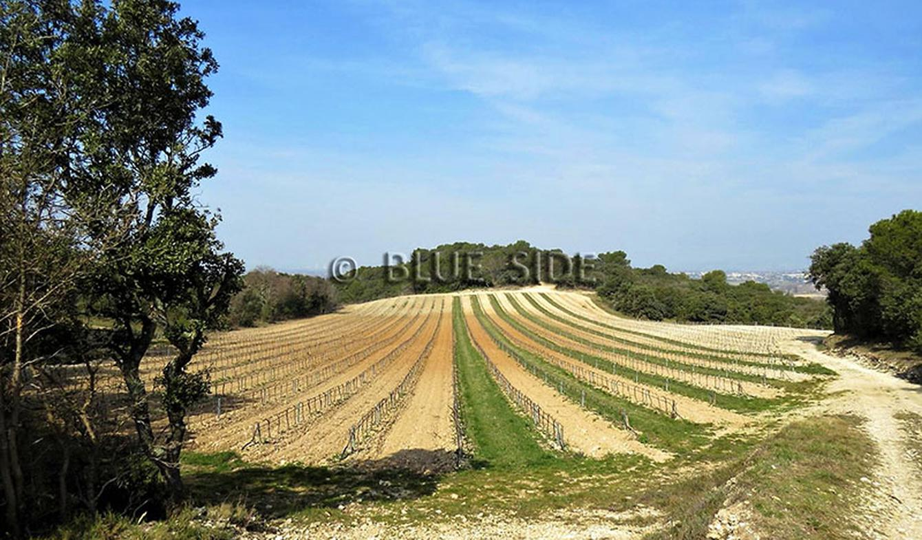 Propriété viticole Gard
