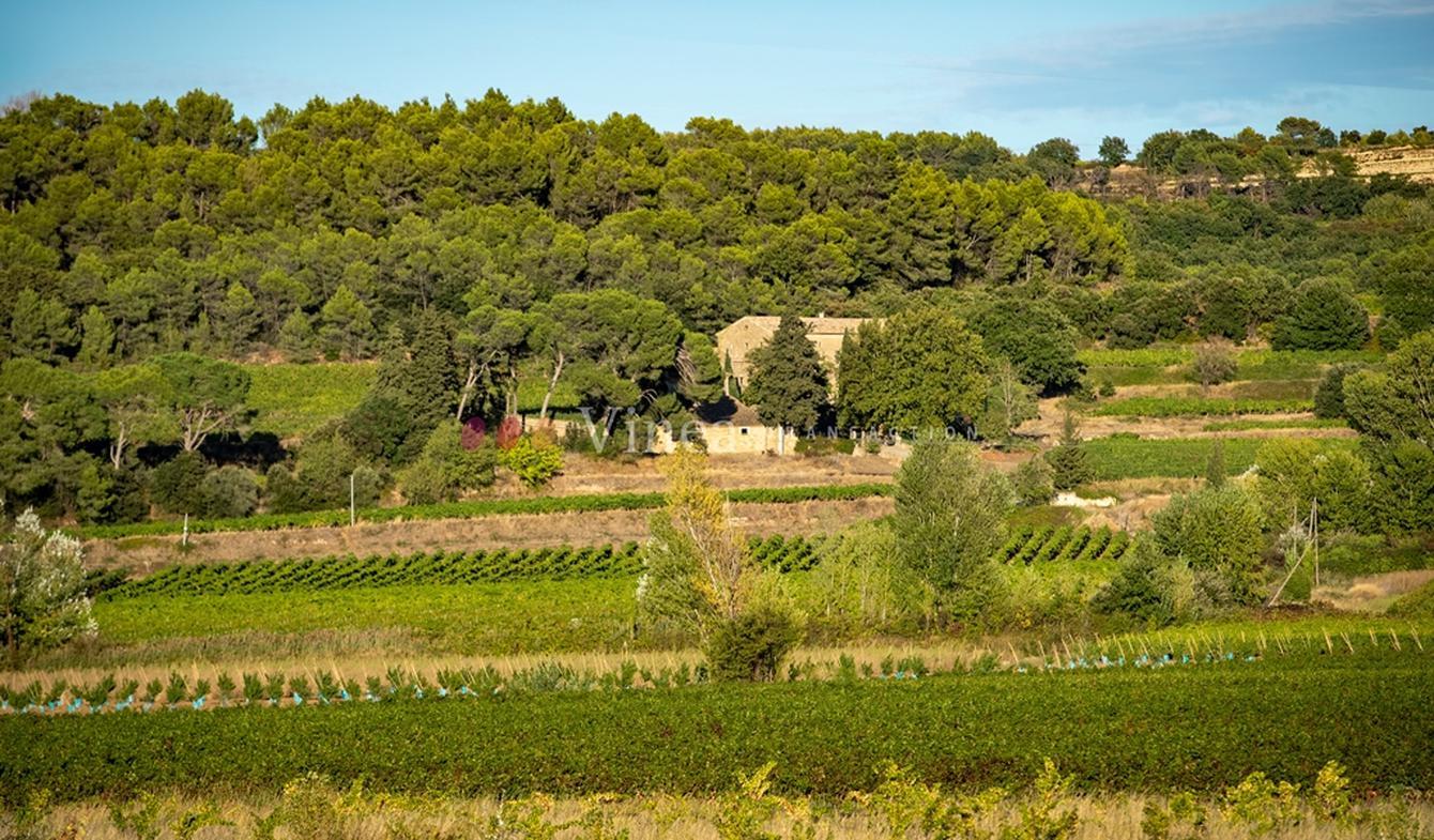 Propriété viticole Avignon