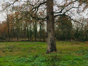 terrain à Estivareilles (03)
