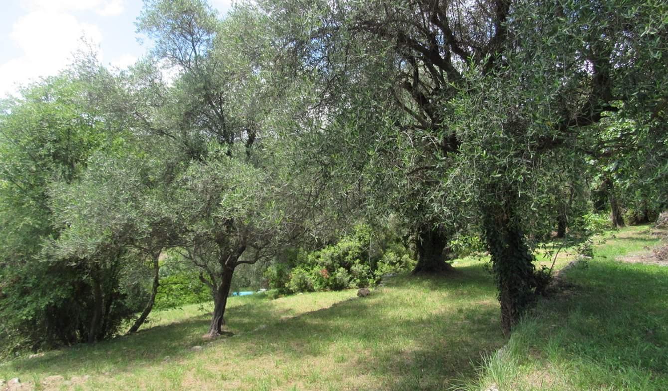 Terrain et forêt Le Rouret
