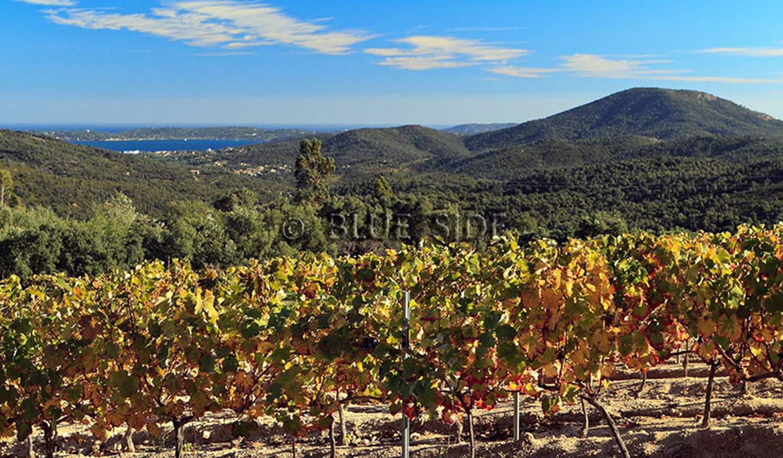 Vineyard Var