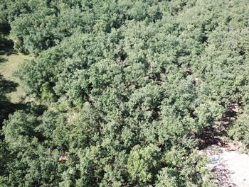 Terrain 2002 m2