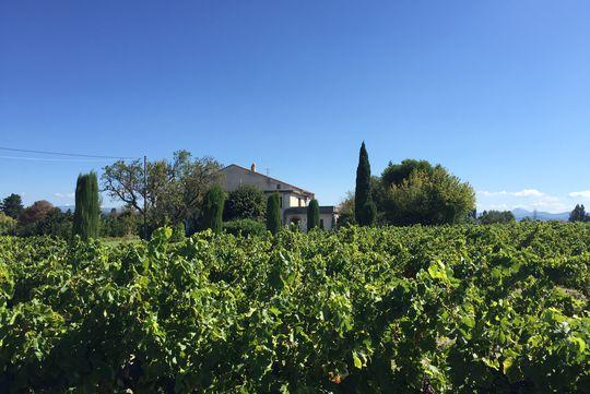 Propriété viticole avec dépendances