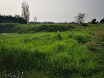 terrain à Champagnolles (17)
