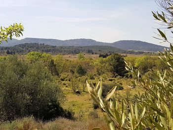 terrain à Montséret (11)