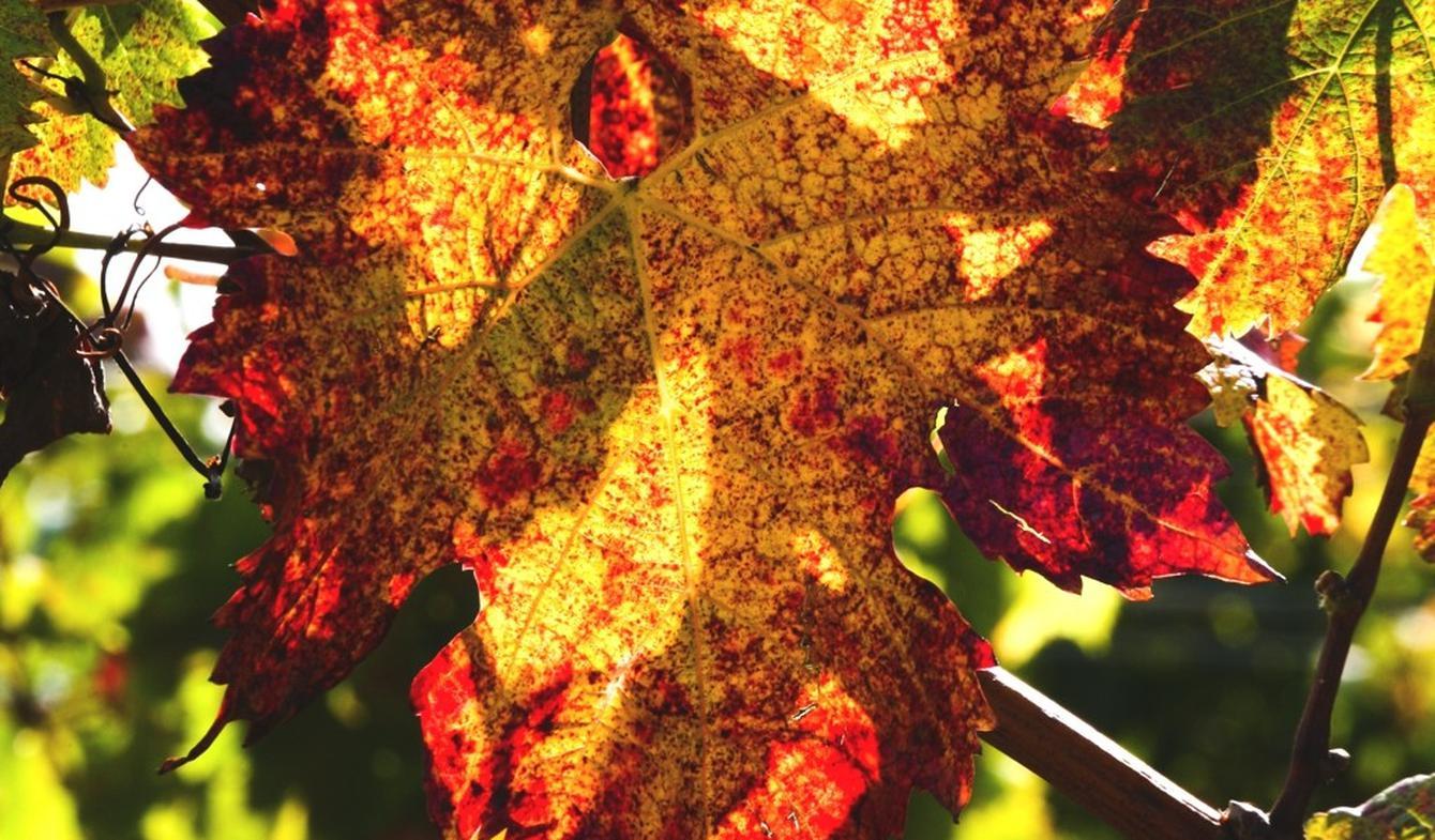 Propriété viticole Perpignan