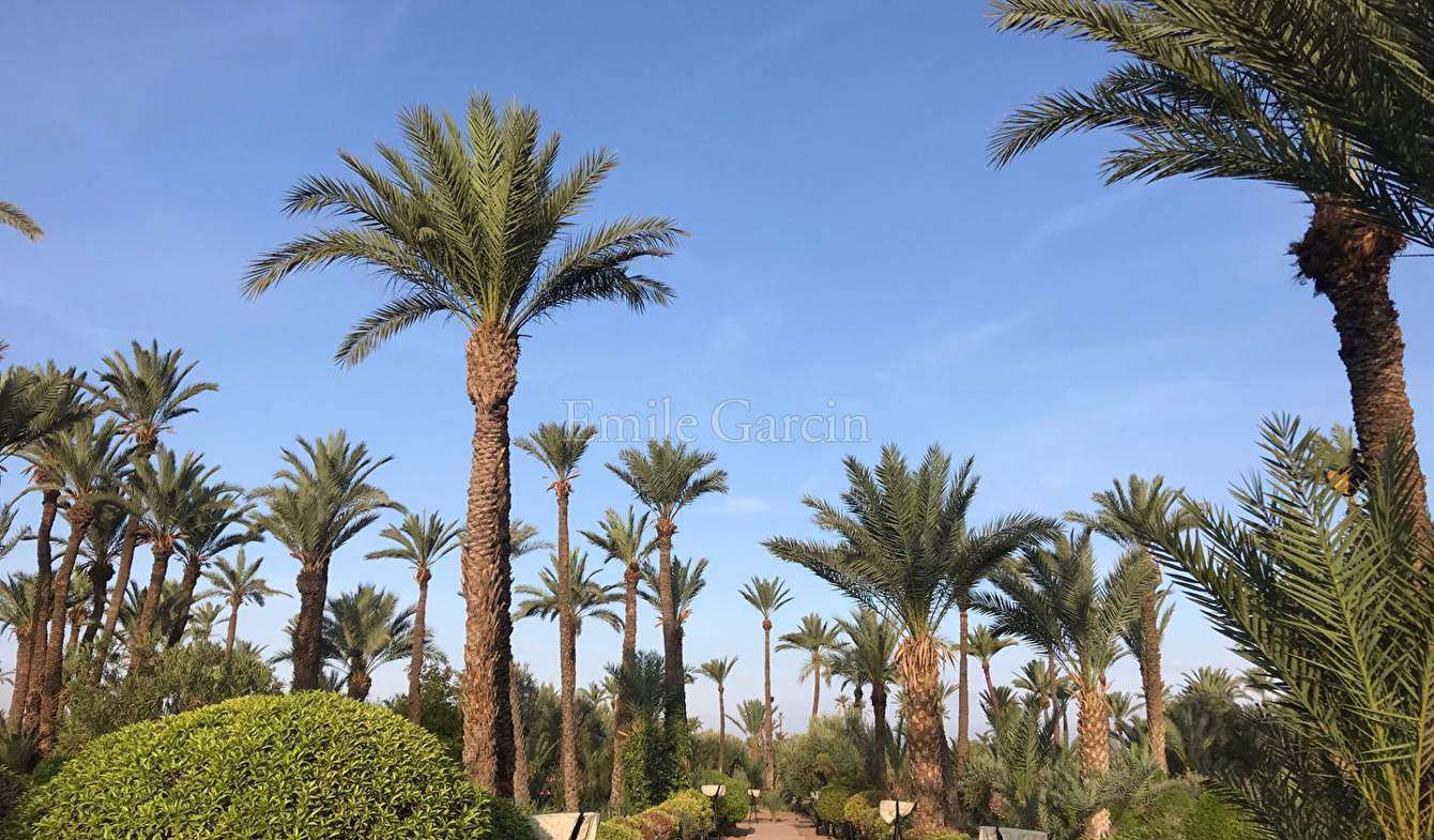 Terrain et forêt Marrakech