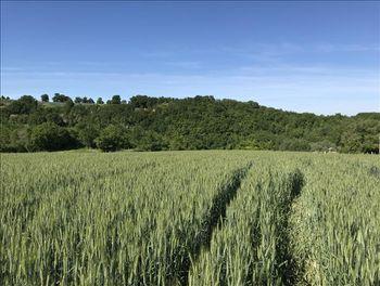 terrain à Saint-Vincent-Lespinasse (82)