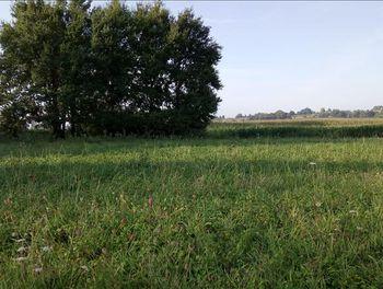 terrain à Gaujacq (40)