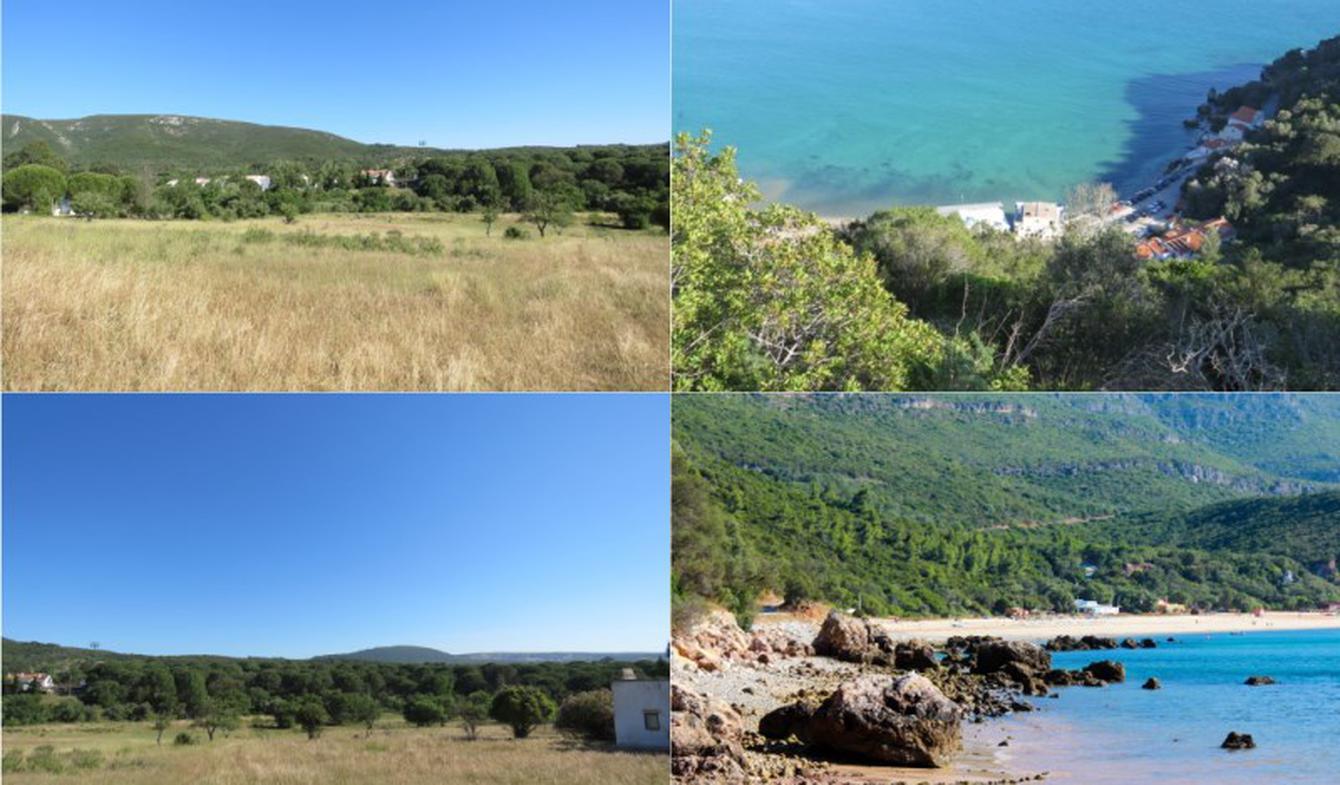 Terrain et forêt Setúbal