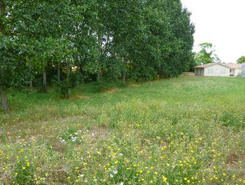 terrain à Doeuil-sur-le-Mignon (17)
