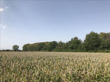 terrain à Montferrand (11)