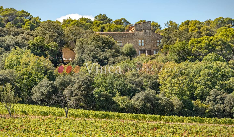 Vineyard with outbuildings Avignon