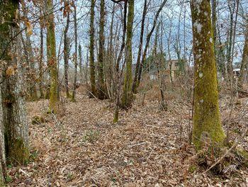 terrain à Pouydesseaux (40)