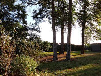 terrain à Saint-Aubin-des-Bois (28)