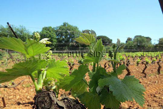 Propriété viticole avec piscine et dépendances