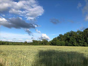 terrain à Cognac-la-Forêt (87)