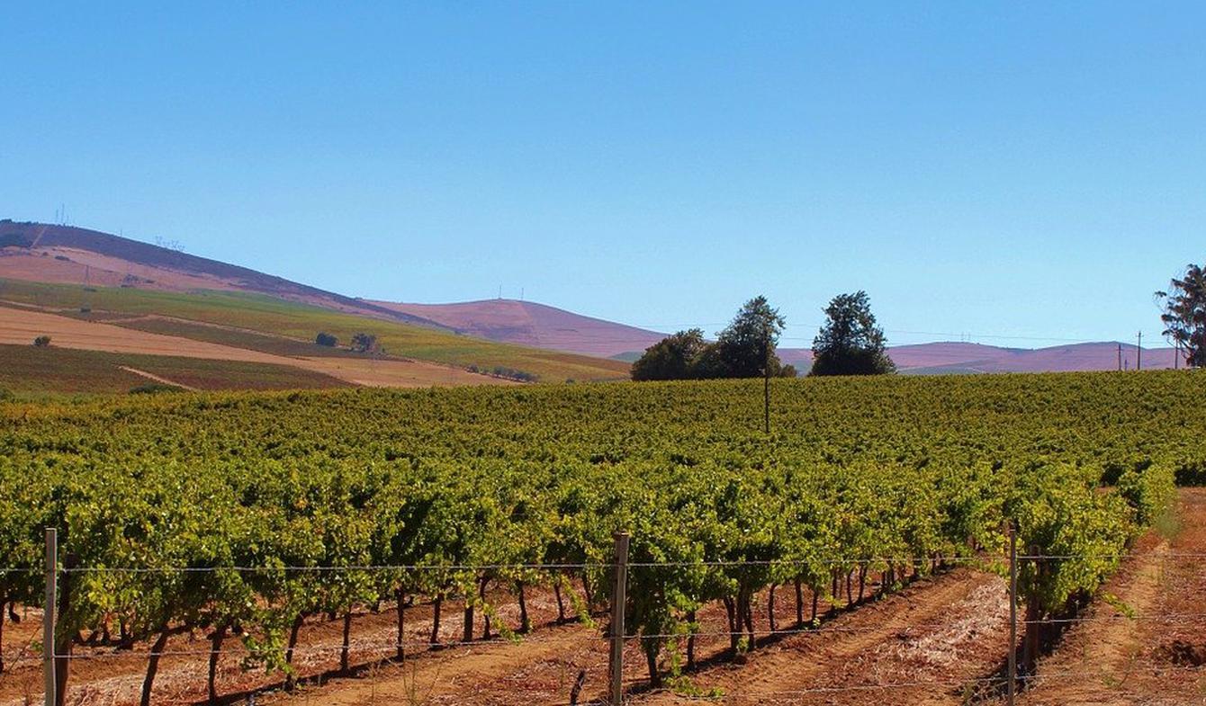 Propriété viticole Lourinhã
