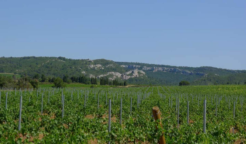 Vineyard with pool and outbuildings Saint-Laurent-de-la-Cabrerisse