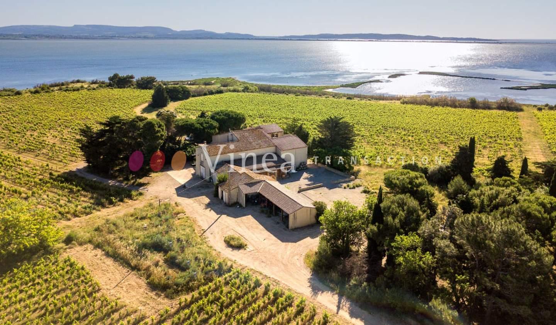Vineyard Aude