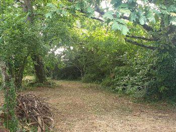 terrain à Saint-Médard-en-Jalles (33)