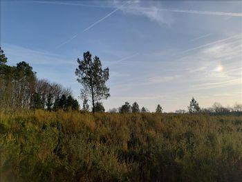 terrain à Saint-Martin-d'Ary (17)