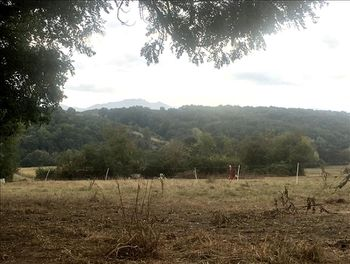 terrain à Larcan (31)