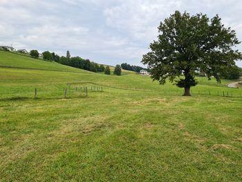 terrain à Rumilly (74)