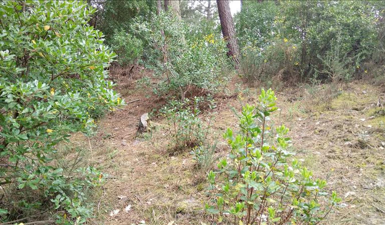 Terrain Lege-cap-ferret
