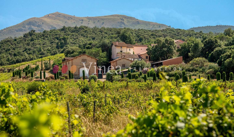 Vineyard with outbuildings Perpignan