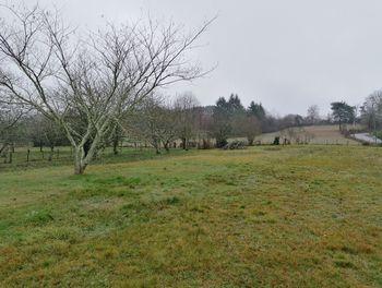 terrain à Cosnac (19)