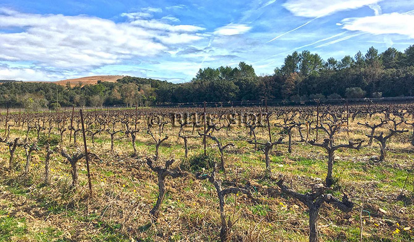 Propriété viticole Lorgues