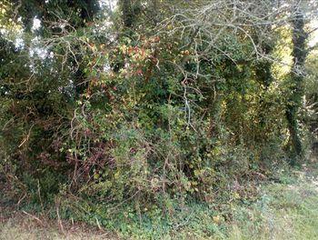 terrain à Cissac-Médoc (33)